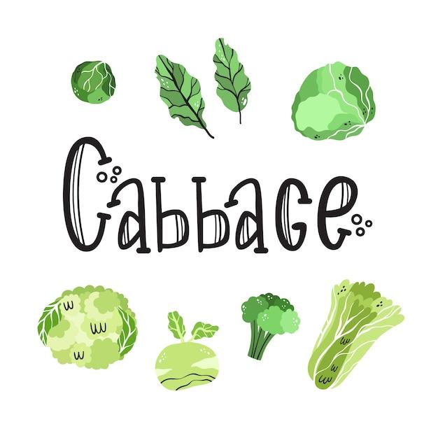 キャベツ家族の野菜入りベクトル。 Premiumベクター
