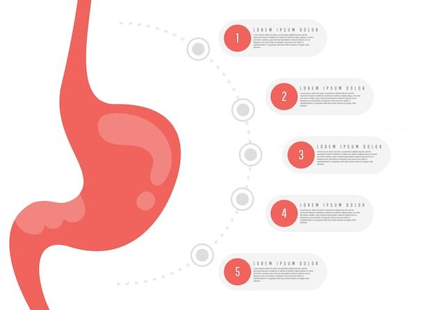 消化器系の解剖学。 Premiumベクター