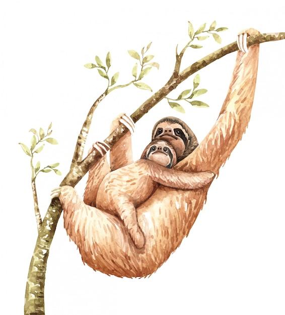 水彩ナマケモノと赤ちゃんが枝にハングします。 Premiumベクター
