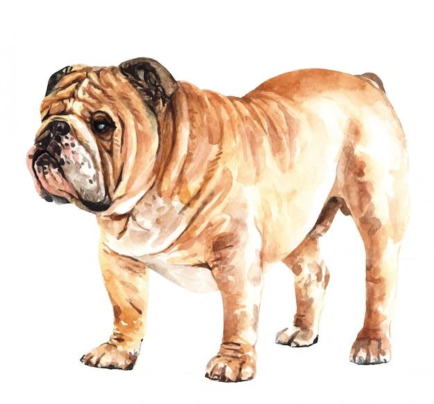 手描き英語ブルドッグ水彩犬。 Premiumベクター