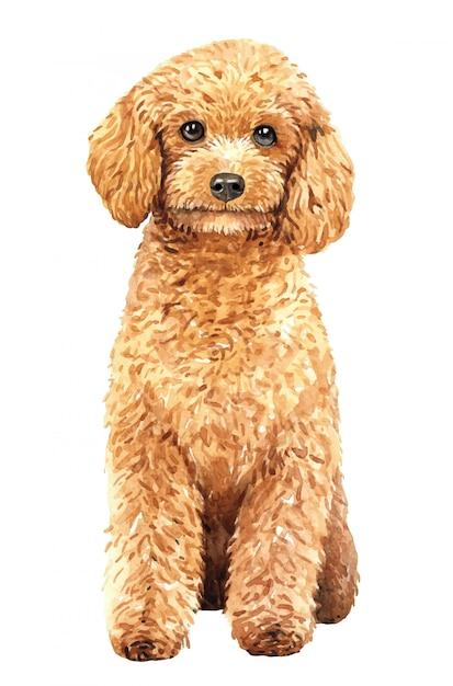 手描きプードル水彩犬。 Premiumベクター