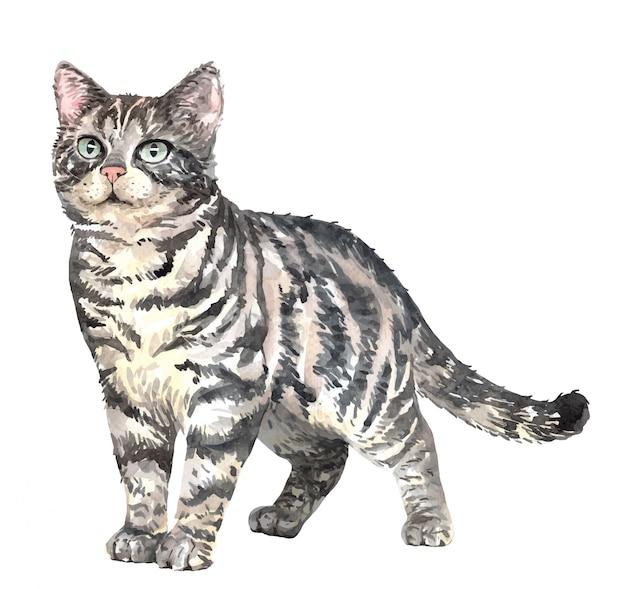 Акварельная кошка американская короткошерстная. краска акварельная кошка. Premium векторы