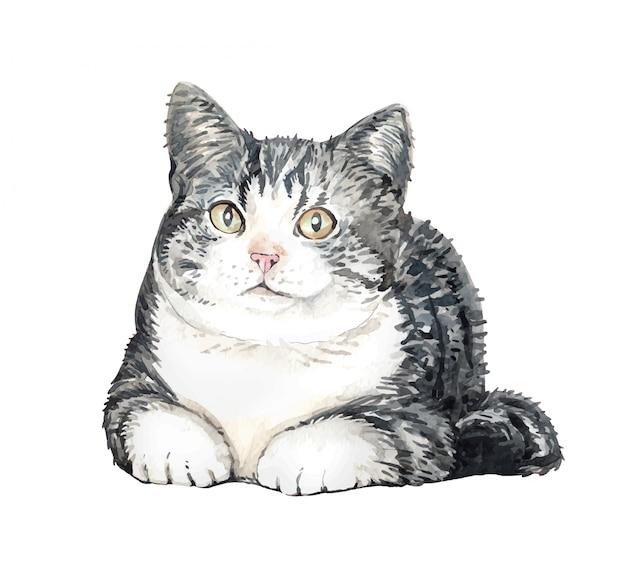 水彩猫アメリカンショートヘア。猫スクワット。 Premiumベクター