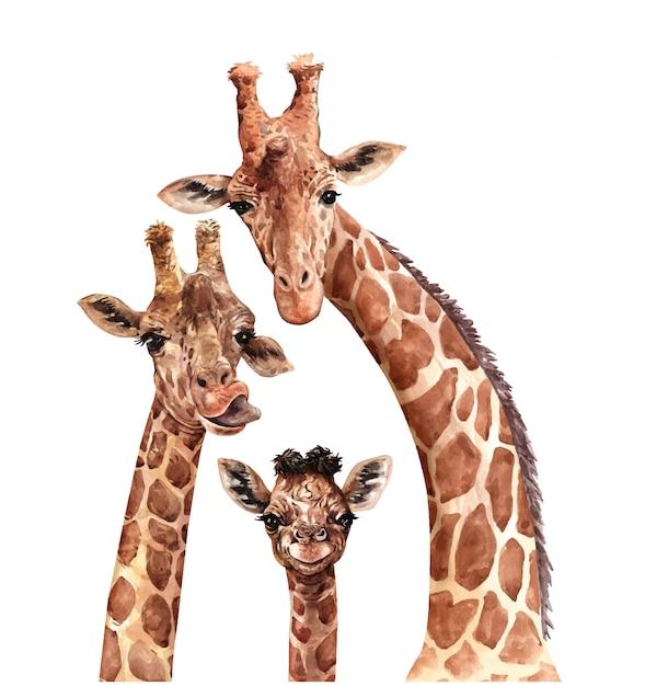 水彩家族キリン。南アフリカの動物。キリンペイント。 Premiumベクター