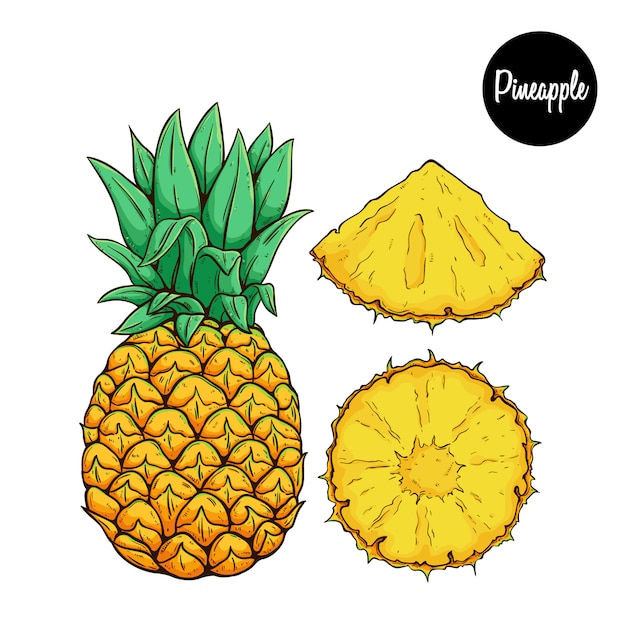 Свежие фрукты ананас с цветным эскизом или рисованной стиль Premium векторы