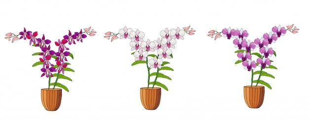 植木鉢に蘭の手描きのセット。 Premiumベクター