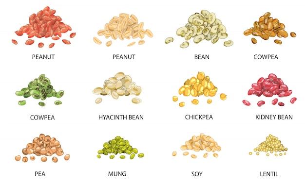 手のセットは、豆の種子の色の山を描画します。 Premiumベクター