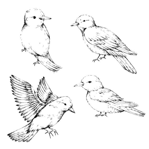 鳥スケッチアートコレクション Premiumベクター