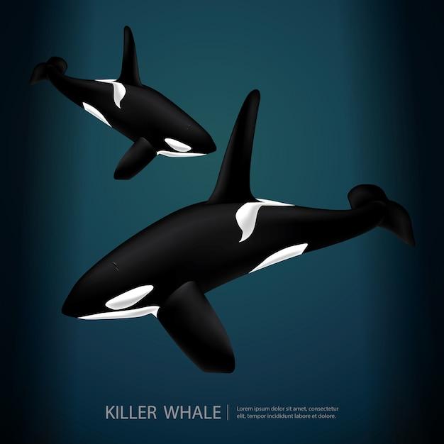 海の下のキラー鯨イラスト Premiumベクター