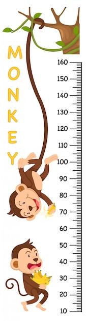 猿とメーターの壁。図。 Premiumベクター