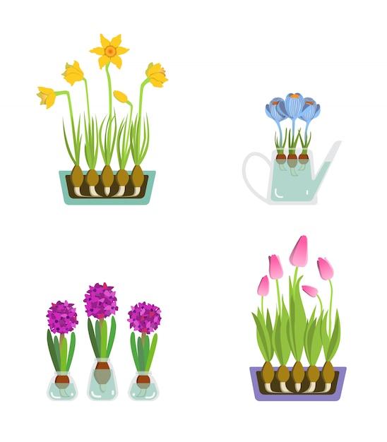 Ранние весенние садовые цветы на день святого валентина Premium векторы