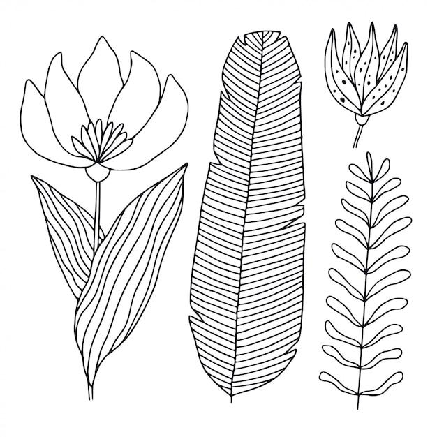 Иллюстрация тропической флоры Premium векторы