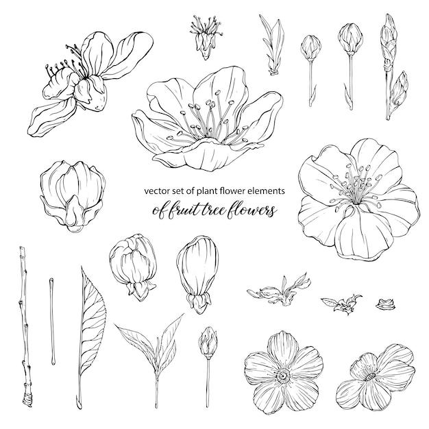 果樹の花の植物の花の要素 Premiumベクター