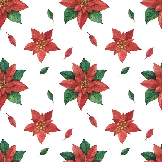 Рождественская красная зеленая звезда пуансеттия рисунок Premium векторы