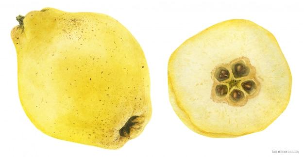 Свежая желтая айва Premium векторы