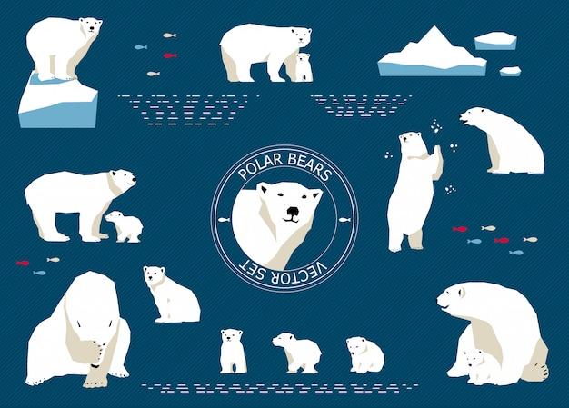 Набор белых медведей Premium векторы