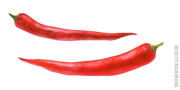 赤唐辛子のトレース水彩イラスト Premiumベクター