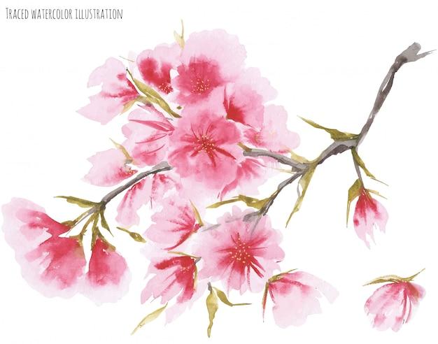 水彩桜 Premiumベクター