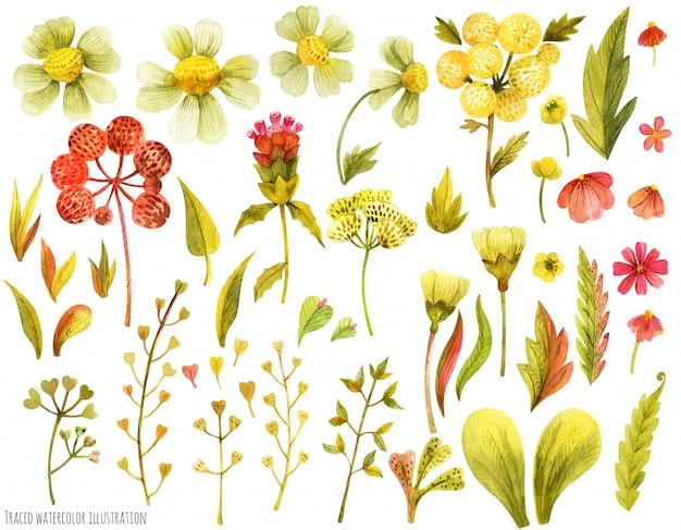 Луговые полевые цветы и травы Premium векторы
