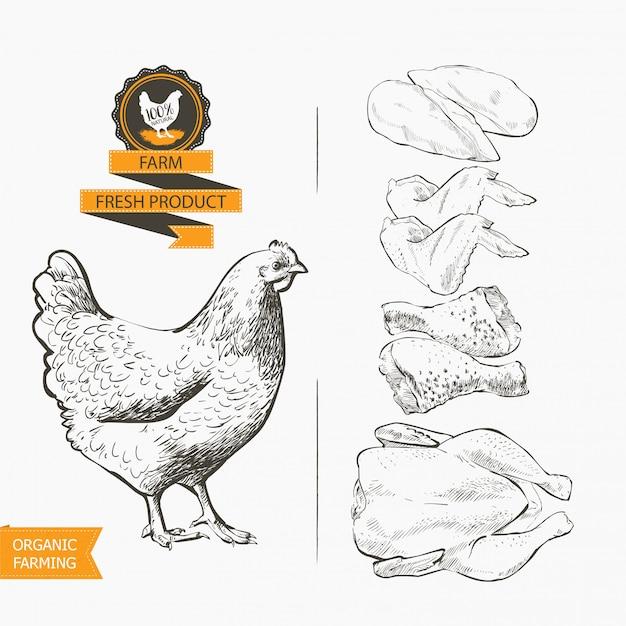 鶏肉のベクトル Premiumベクター