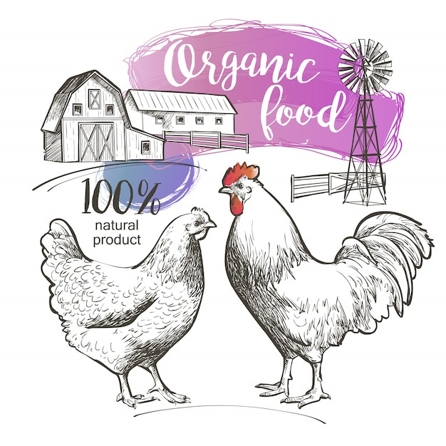 鶏鶏鶏鶏雄鶏おんどりと農場 Premiumベクター