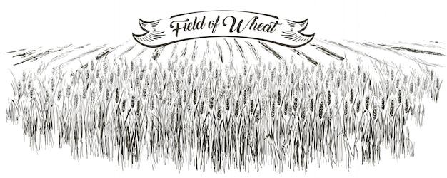 農村景観フィールド小麦。手描きベクトル田舎風景スタイルイラストを彫刻します。 Premiumベクター