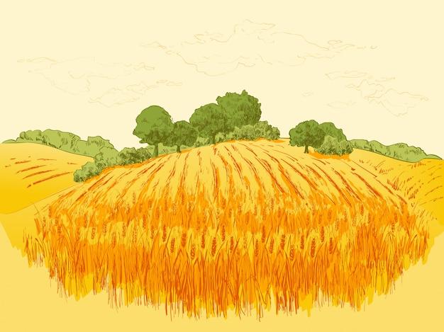 農村景観フィールド小麦イラスト Premiumベクター