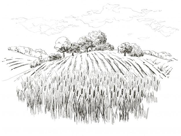 小麦畑 Premiumベクター