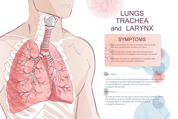 Вектор дыхательной системы человека Premium векторы