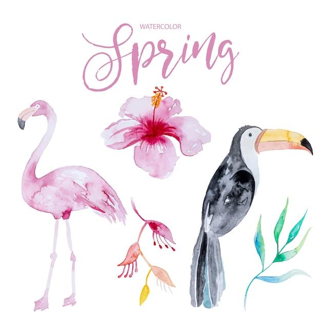 鳥と熱帯の花のカラフルなセット Premiumベクター