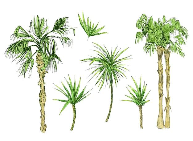 ココヤシの木やヤシの木と葉 無料ベクター