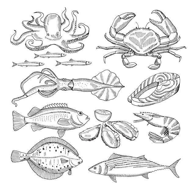 Рука рисунок векторные иллюстрации из морепродуктов для меню ресторана Premium векторы