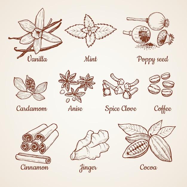 シナモン、チョコレート、レモン、その他のキッチンハーブ。手描きのイラスト。アロマクローブとアニス、スパイスポピー、ミントとバニラのベクトル Premiumベクター