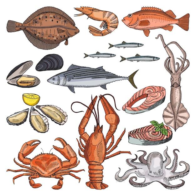 Иллюстрации морепродуктов для гурманов меню. векторные картинки кальмаров, устриц и разных Premium векторы