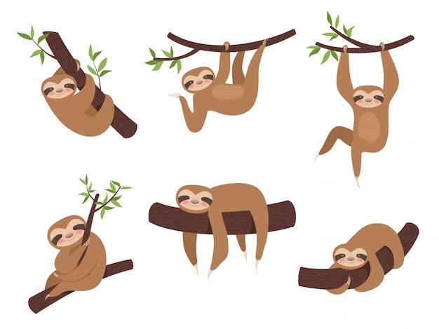 Ленивцы симпатичное сонное животное на ветке дерева Premium векторы
