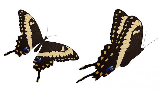 黒いアゲハ蝶のベクトル図 Premiumベクター