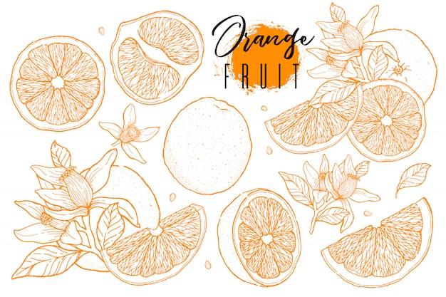 オレンジ色の果物のインク描画セット Premiumベクター