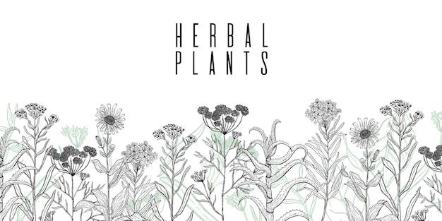 野生植物の描画とフレーム Premiumベクター