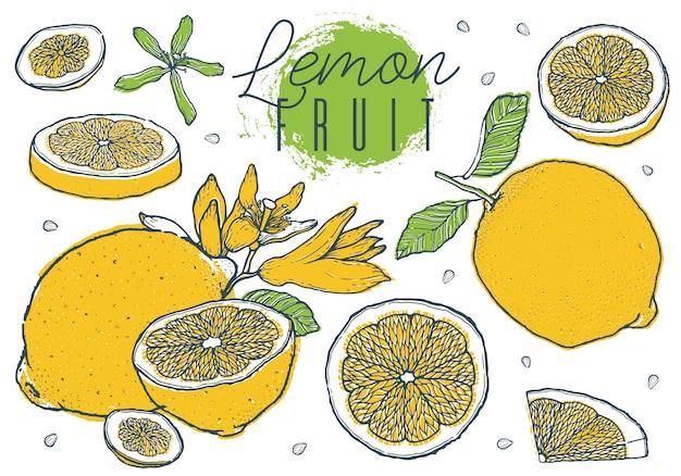 フルーツレモンセット手描きスケッチカラフルです。 Premiumベクター
