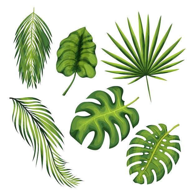 エキゾチックなジャングルの植物はベクトルイラストセットを残します。ヤシの木、バナナ、シダ、モンステラの枝の孤立した図面 Premiumベクター