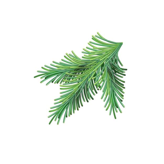 Рождественская зеленая пышная еловая ветвь. елочная новогодняя сетка ветка Premium векторы