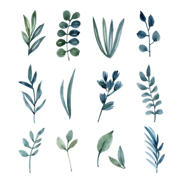 Акварельные элементы листья набор ручной росписью пышных цветов. Бесплатные векторы