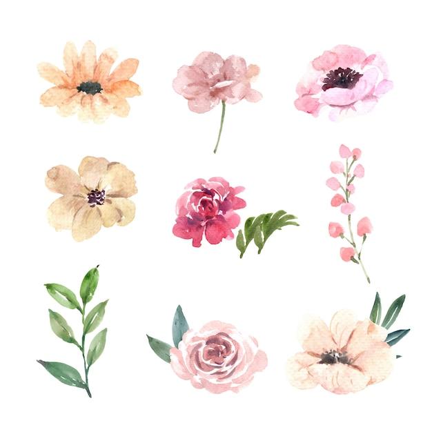 水彩ピンクの牡丹、花の手描きイラストのセット 無料ベクター