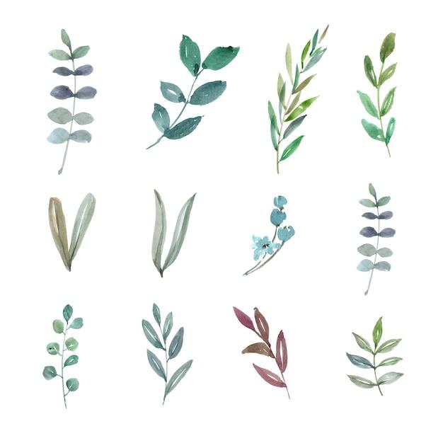 Набор акварельной листвы, рисованной иллюстрации элементов изолированы Бесплатные векторы