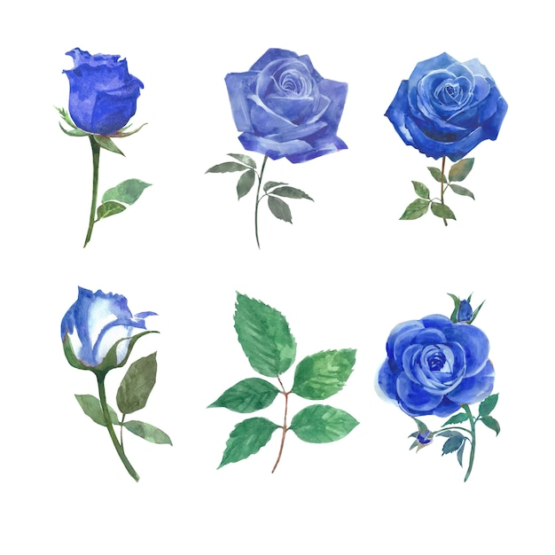Блум цветок элемент розы акварель на белом для декоративного использования. Бесплатные векторы