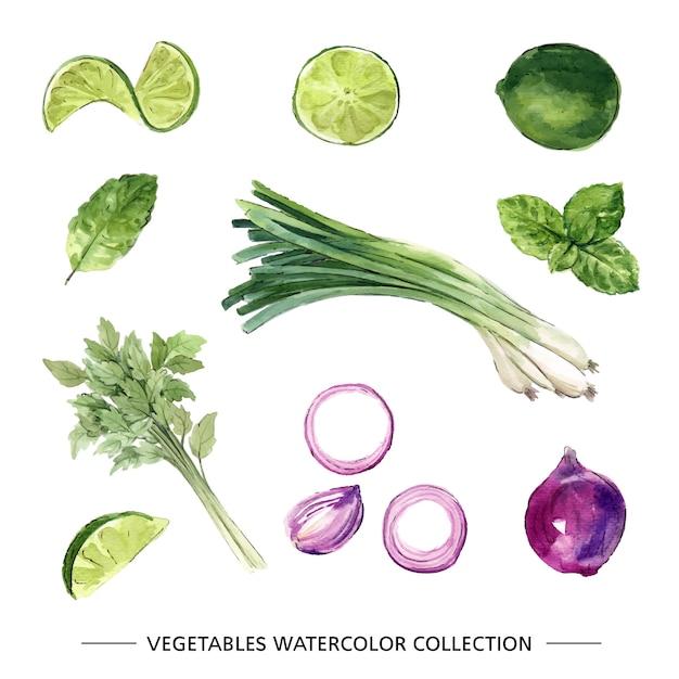 装飾用の白い背景の様々な分離水彩野菜イラスト。 無料ベクター