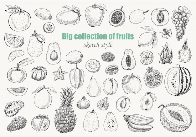 Большая коллекция фруктов Premium векторы