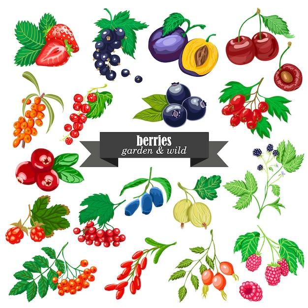 庭と野生の果実のベクトルコレクション Premiumベクター