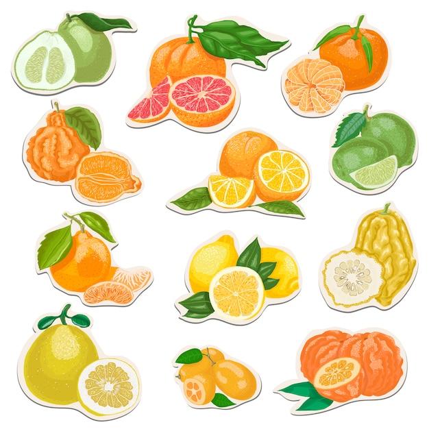 柑橘類のセット Premiumベクター