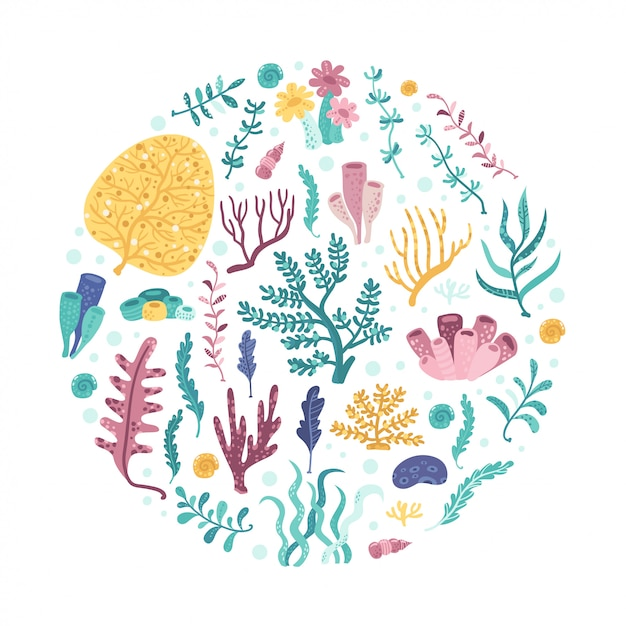 海藻サークル。あなたのデザインのベクトル図 Premiumベクター